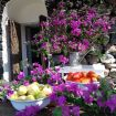 Mix di frutta fresca di stagione e fiori - Zighidì Bellavista
