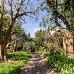 Il viottolo d'ingresso alla villa - Giardino di Michela