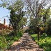 Viottolo per passeggiate nel giardino - Giardino di Michela