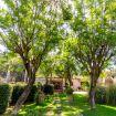 La rigogliosa vegetazione presente nel giardino - Villa Elda