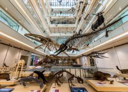 Boutique Trento  Sciences Museum (MUSE) and Castello Buonconsiglio